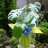 order plants online. Buy Plants Online In Bangalore,Bonsai For Sale Bangalore,Order Bangalore Order