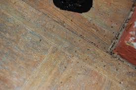 Little Black Ants In Kitchen Small Ants In Kitchen Modern Kitchen Ideas