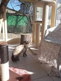 Was macht ein hund 2,5 stunden allein zu hause? Die Katzen Wg Katze Guck Hinauf Zum Kratzbaum Wattpad