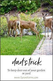 dad s trick to keep deer out of your