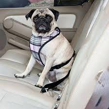 cat car seat pet dog cat car seat belt cat skins car seats cat car seat