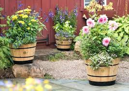 wooden whiskey barrel planter oak planting ideas