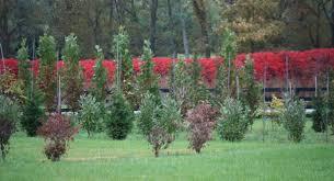 tree farm glynn young s landscaping nursery center lexington and nicholasville ky