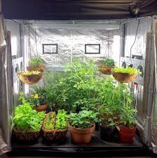 indoor tomato garden. 7 Steps To Run Container Gardening For Beginners Indoor Tomato Garden O