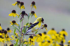 images of flowers and birds. Plain And On Images Of Flowers And Birds E