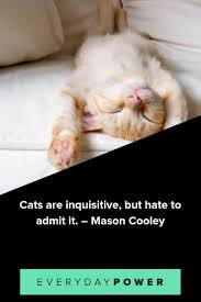 50 Cat Quotes That Are Too Perfect For Words 2019