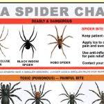 Free Spider Identification Chart Usaspiderchart Free Samples Hub