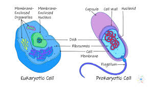 Prokaryotic Vs Eukaryotic Cells Similarities Differences
