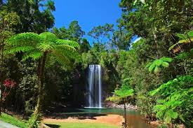 Image result for images cairns australia