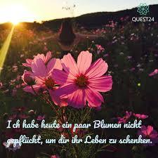Quest24net On Twitter Blumen Flowers Love Life Liebe