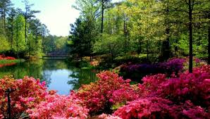 Small Picture Callaway Gardens Flowers Lake Bridge Trees Red Leaves Beautiful