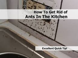 Little Black Ants In Kitchen How To Get Rid Of Ants From Car Solution For How To For Dummies