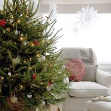 Where To Buy A Christmas Tree In Yorkshire  Christmas In When Should You Buy A Christmas Tree