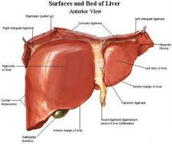 Hasil gambar untuk zat sisa yang dikeluarkan oleh tubuh