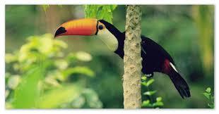 Доклады о животных тропических лесов джунглей  Кто живёт в тропиках и джунглях