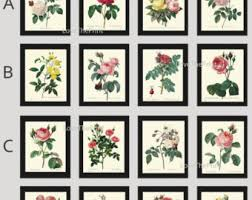 Small Picture Botanical prints Etsy