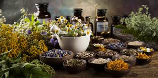 Image result for Herbs as Medicines.