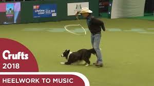 Amazing <b>Cowboy</b> routine in Freestyle Heelwork to Music | Crufts <b>2018</b>
