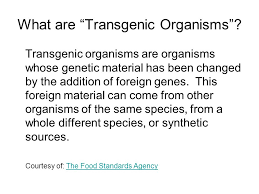 Most transgenic organisms are generated in the laboratory for research purposes. Transgenic Organisms Ppt Video Online Download