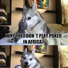 Husky Lolz Cheetah Lolz by gawenirs - Meme Center via Relatably.com