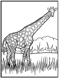 Small Picture Beautiful Giraffe Coloring Page 81 For Your Coloring Pages for