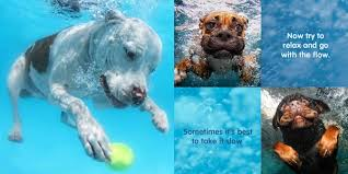 win a copy of seth casteel s book underwater dogs kids edition