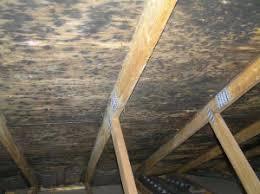 mold in attic. Plain Attic Black Mold In Attic With Mold In Attic