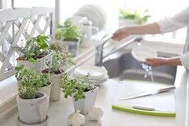 where to grow your herb garden