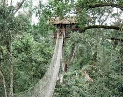 The Canopy Rainforest TreehousesThe Canopy Treehouses