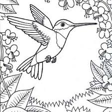 Small Picture Inspirational Design Hummingbird Coloring Pages Hummingbirds