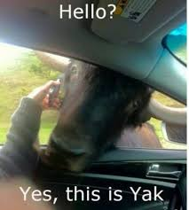 hello this is dog. this is dog. see more. hello yak! this is dog