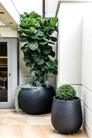 extra large planters exteriors indoor