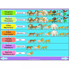 Image result for classifying organisms clipart