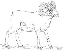 Small Picture Download Coloring Pages Sheep Coloring Page Sheep Coloring Page