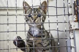 cats in animal shelters. Modren Shelters And Cats In Animal Shelters Y