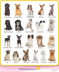 Dog Breed Chart With Names Types Of Toy Breeds Types Of Dogs Breeds Dog Breeds List