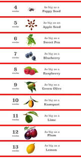 Diet Chart For 6 Week Pregnancy 19 Best Baby Size Charts And Timelines Images Baby Size