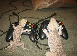 صور حيوانات مضحكة images?q=tbn:ANd9GcQ