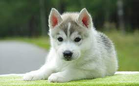 45 Cute Dog Wallpapers - WallpaperBoat