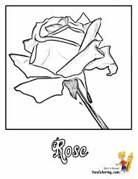 Children's coloring pages for boys and girls. Rose Flowers Coloring Pages Free Yescoloring Rose Coloring
