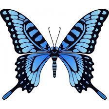 Znalezione obrazy dla zapytania Niebieski motyl