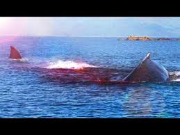 real megalodon shark sightings pictures. Brilliant Sightings Megalodon Shark Caught On Tape  Best Evidence UFO Sightings Real Dragon  U0026 Recent Bigfoot 2017 Throughout Sightings Pictures