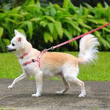 Pet Harness Princess Paws