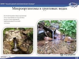 Презентация на тему РЕФЕРАТ Тема Влияние химических и  11 Микроорганизмы