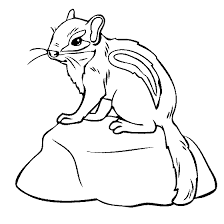 chipmunk coloring pages free for children fusr org
