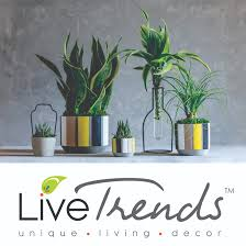 Livetrends Design Group Creative Director Lemanoosh