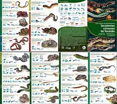 Snakes Of Belize Belize Animals Caribbean Critters