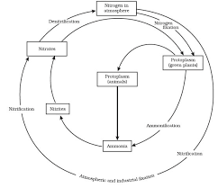 Carbon Cycle Nitrogen Cycle Phosphorus And Sulphur Cycle