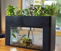 aquarium garden. Plain Aquarium In Aquarium Garden ThisIsWhyImBroke