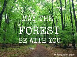 Forest Quotes Enchanting Quote May The Forest Be With You Upnorth KCarisma